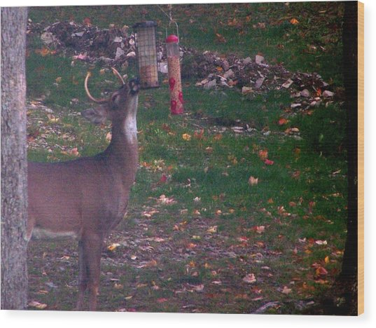 Buck Checking Out Birdseed Wood Print by Lila Mattison