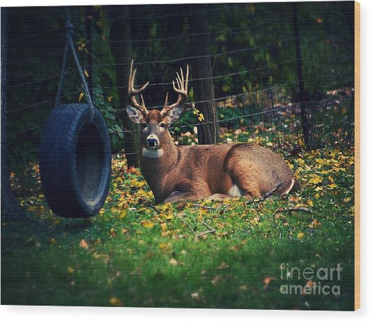 Buck In The Back Yard Wood Print