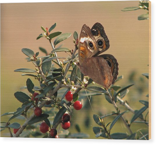 Buckeye Beauty Wood Print