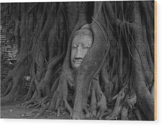 Buddha Head In Roots Of Bodhi Tree Wood Print by Zestgolf