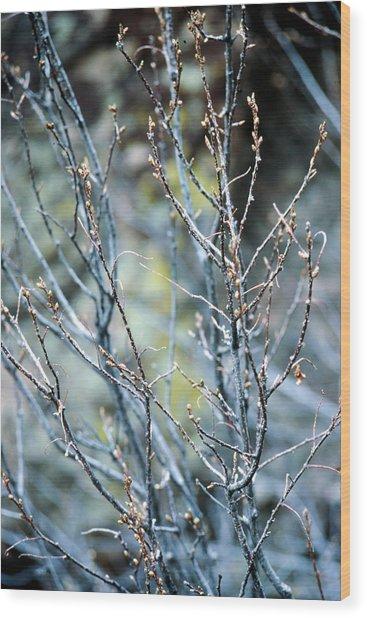 Budding Bush Wood Print
