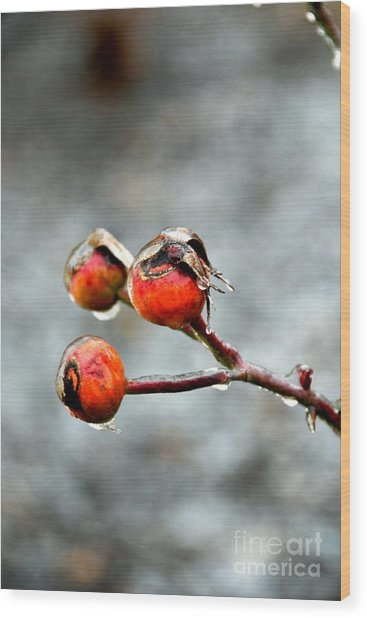 Buds On Ice Wood Print