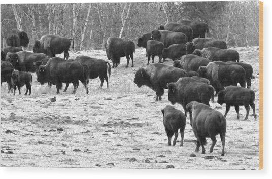 Buffalo Wood Print by Brian Sereda