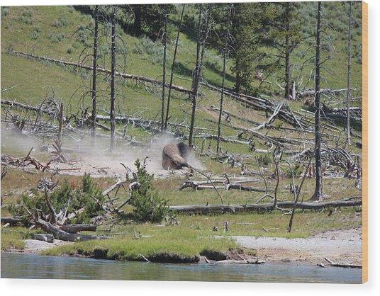 Buffalo Dust Bath Wood Print