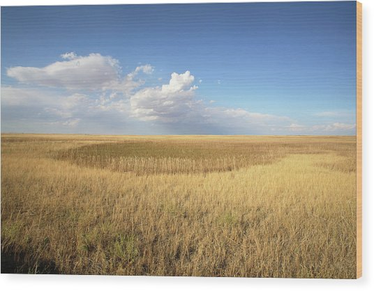 Buffalo Gap National Grassland Wood Print by Peter Falkner/science Photo Library
