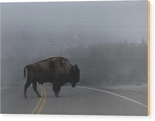 Buffalo In The Mist Wood Print