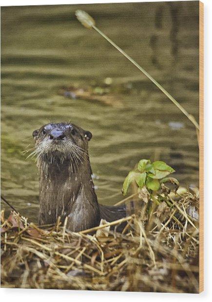 Buffalo National River Otter  Wood Print