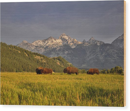 Buffalo Sunrise Wood Print