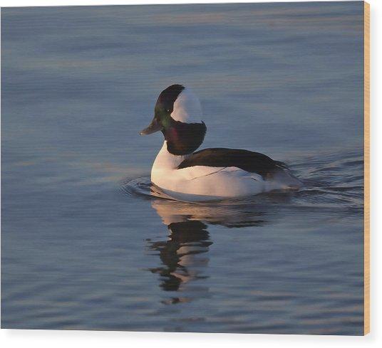 Bufflehead Duck Wood Print