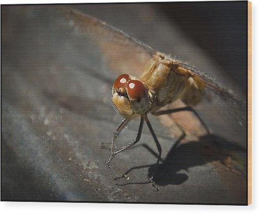 Bug-eyed Wood Print by Christine Nunes