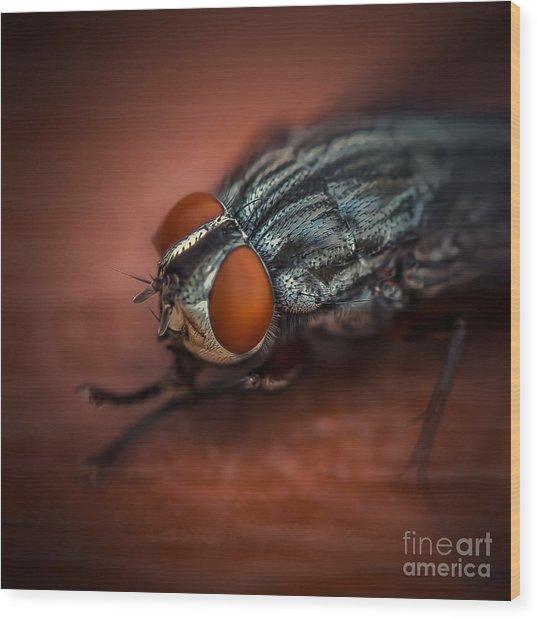 Bug Eyed  Wood Print