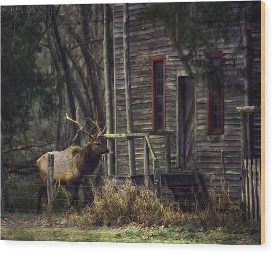 Bull Elk By The Old Boxley Mill Wood Print