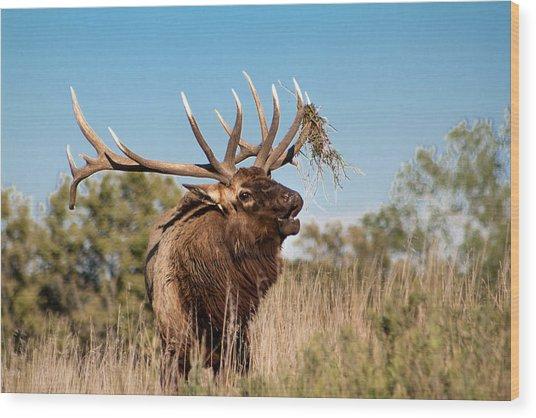 Bull Elk Call Wood Print
