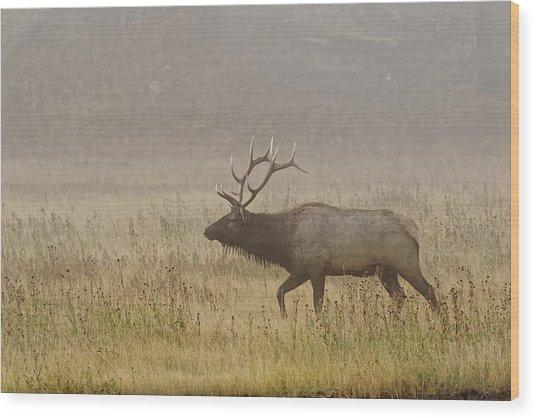 Bull Elk On Foggy Morning Along Madison Wood Print by Adam Jones