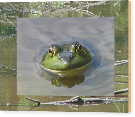 Bull Frog And Pond Wood Print