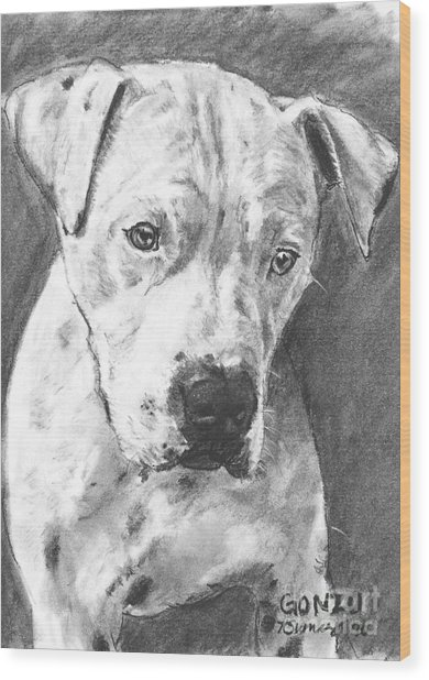 Bull Terrier Sketch In Charcoal  Wood Print