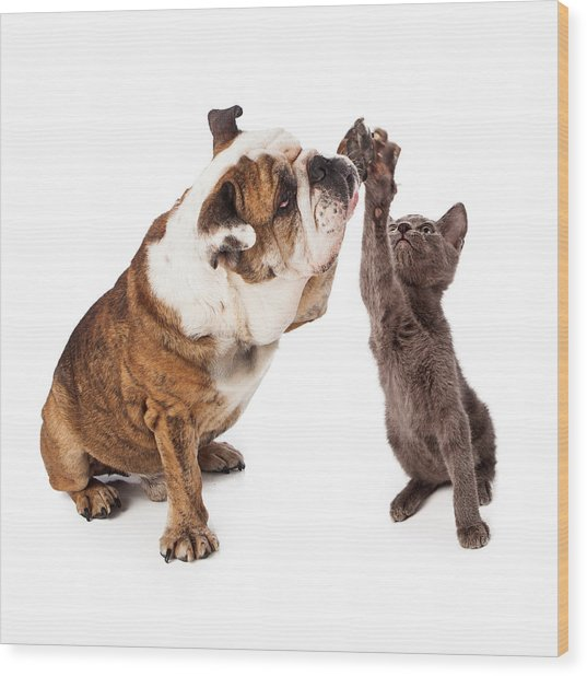 Bulldog And Kitten High Five  Wood Print