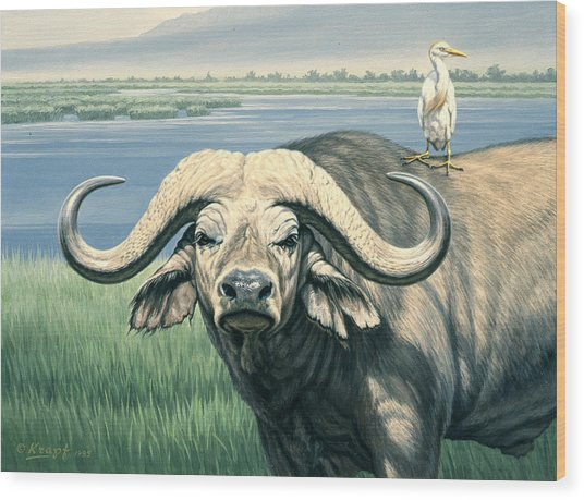 'bullrider'   Wood Print