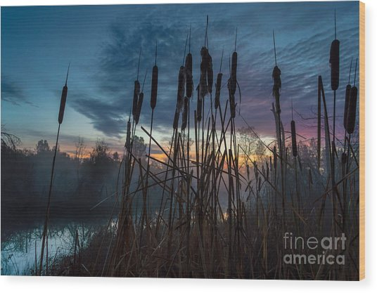 Bulrush Sunrise Wood Print