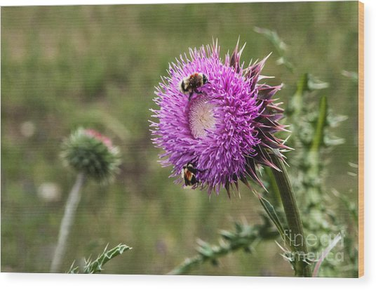 Wood Print featuring the photograph Bumble Bees by Mae Wertz