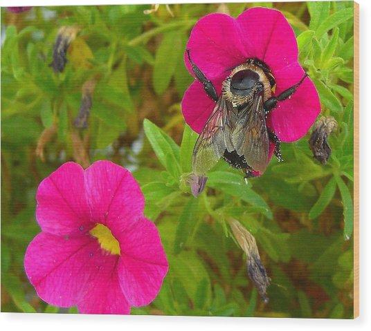 Bumblebee Hug Wood Print