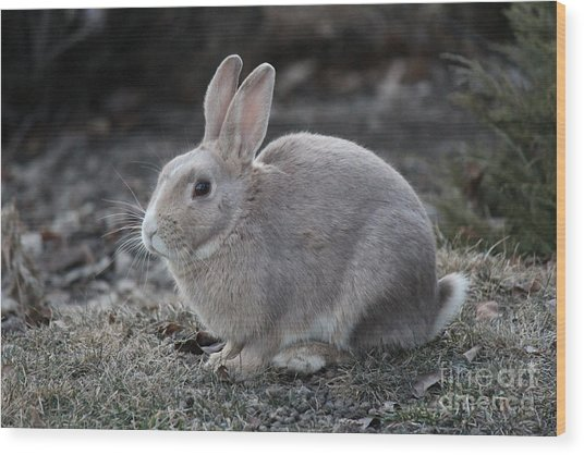Wood Print featuring the photograph Bunny by Ann E Robson