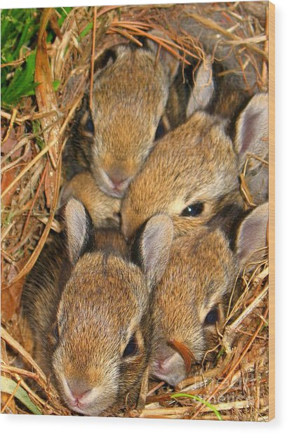 Wood Print featuring the photograph Bunny Babies by Patti Whitten