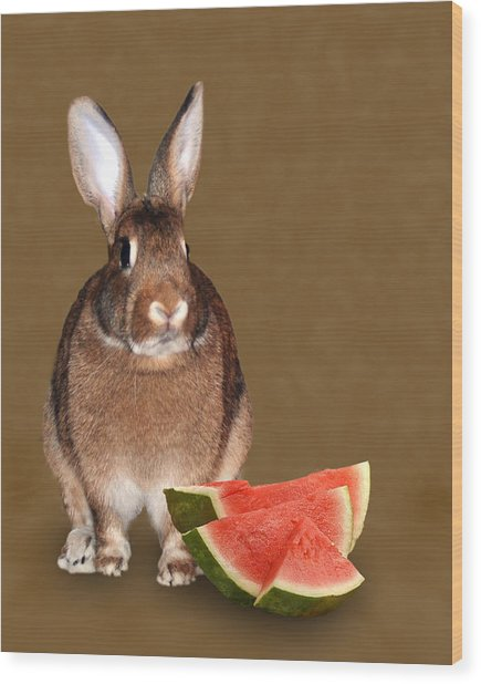 Bunny Snack Wood Print