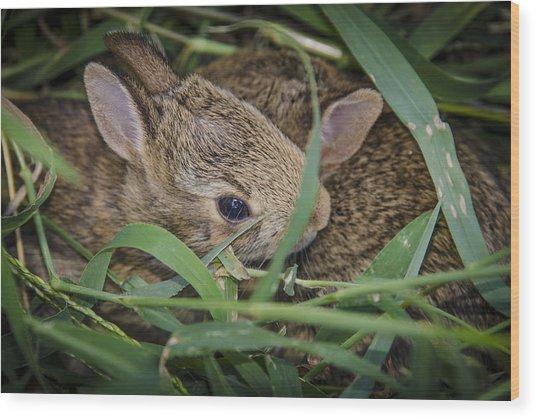 Bunny Twins Wood Print
