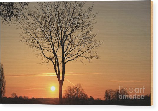 Burning Tree In The Sunrise Wood Print