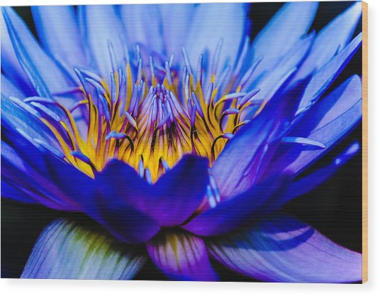 Burning Water Lily Wood Print