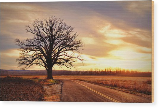 Burr Oak Silhouette Wood Print