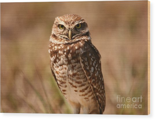 Burrowing Owl Impressions Wood Print