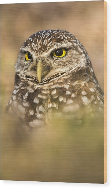Burrowing Owl Portrait Wood Print