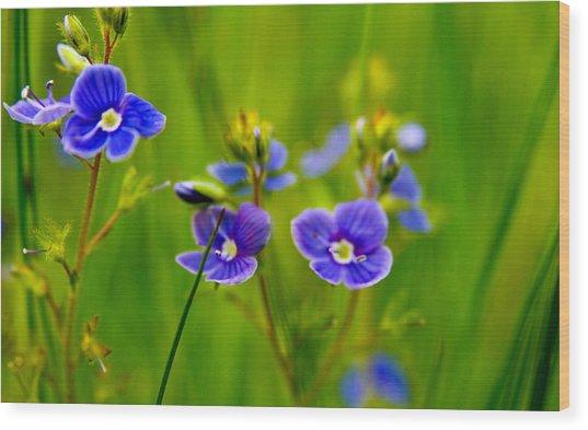 Burst Of Blue Wood Print by Kim Lagerhem