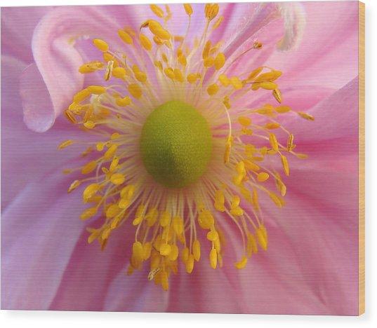Windflower Wood Print