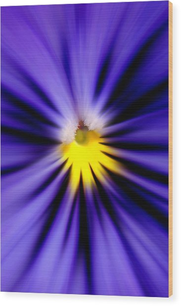 Bursting With Blue Pansy Wood Print