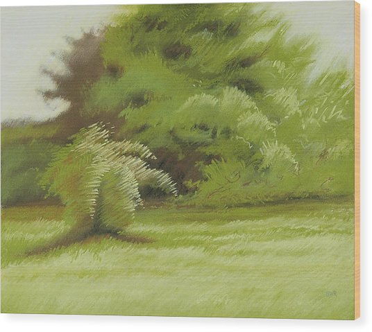 Bush And Brush Wood Print by Bruce Richardson