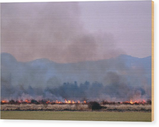 Bush Fire In British Columbia Wood Print by David Nunuk/science Photo Library