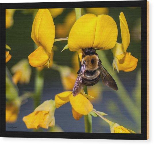 Busy Bee 3 Wood Print