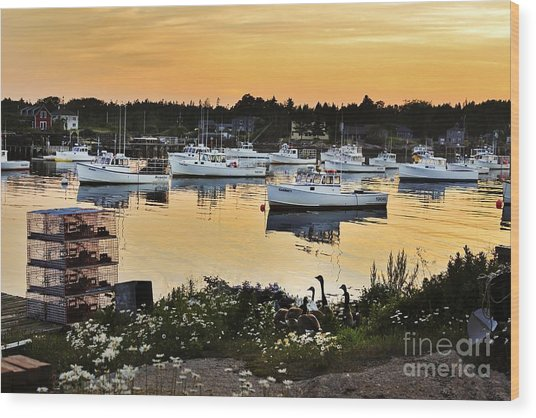 Busy Harbor Wood Print