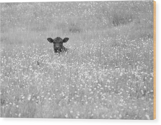 Buttercup In Black-and-white Wood Print