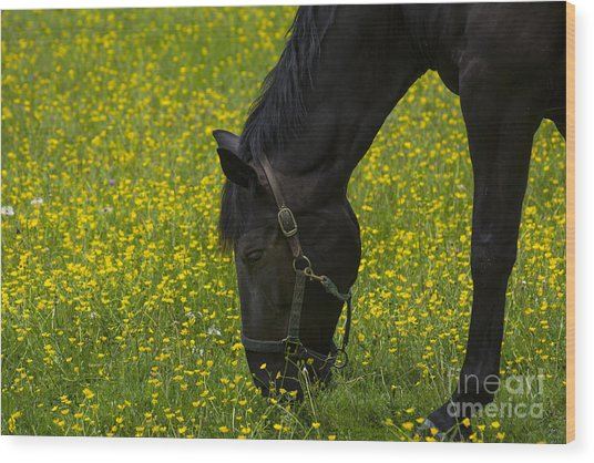 Buttercup Food Wood Print