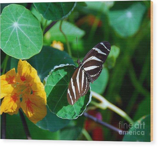 Butterflies Are Free Wood Print by Mel Steinhauer