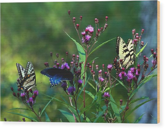 Butterflies Three Wood Print