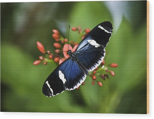 Butterfly 0002 Wood Print