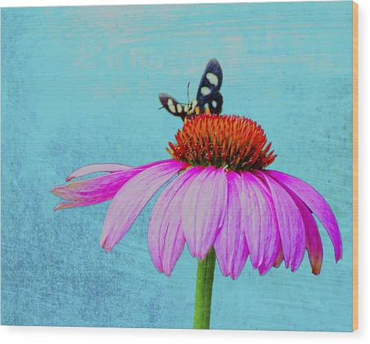 Butterfly And Coneflower On Turquoise Wood Print by Dan Holland