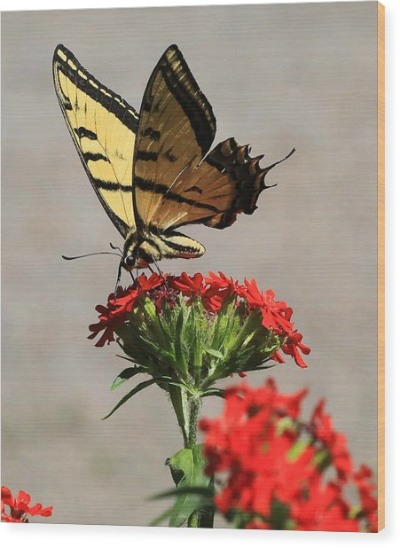 Butterfly And Maltese Cross 1 Wood Print