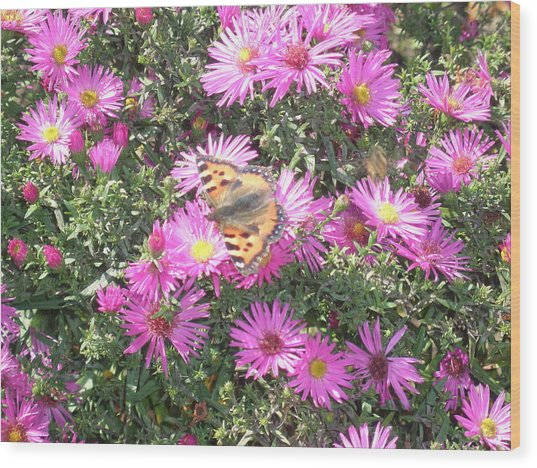Butterfly And Pink Flowers Wood Print