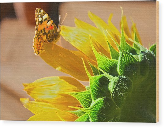 Butterfly And Sunflower Meeting Wood Print